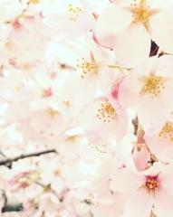 笑顔を作る花