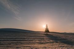 美瑛 木のある夕景
