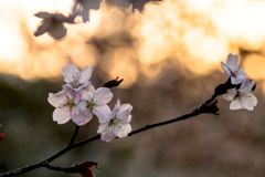 春風と夕陽