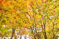 重ねる秋色