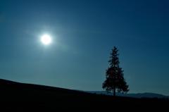 美瑛 太陽と木