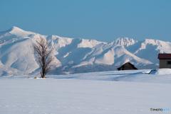美瑛 いつか見た冬景色
