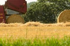 麦わらロールの切り離し