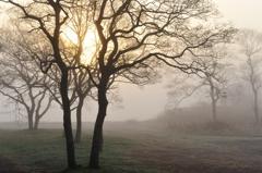 朝陽 霧中