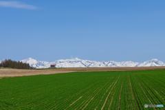 十勝岳連峰と春の大地