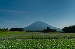 メークイーンの花咲く羊蹄山