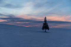 厳寒のツリー