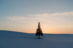 美瑛 冬のツリー