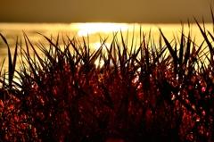 支笏湖 湖畔の秋