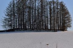 春の雪原を翔ける