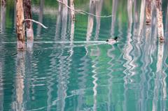 青い池 ゆがみ