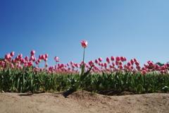 『Spring concert』