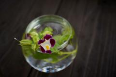 花・水・ガラス