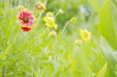南国flower