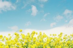 青と黄色のハーモニー