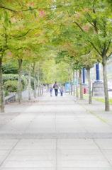 Maple leaf street