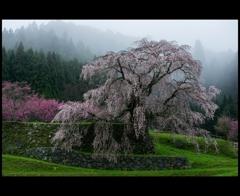 幾星霜の春