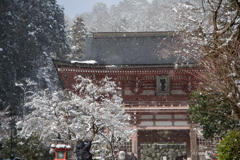 雪踊る鞍馬寺