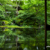 瑠璃光院 臥龍の庭