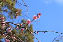 春の晴れた日