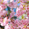 春色・・・。