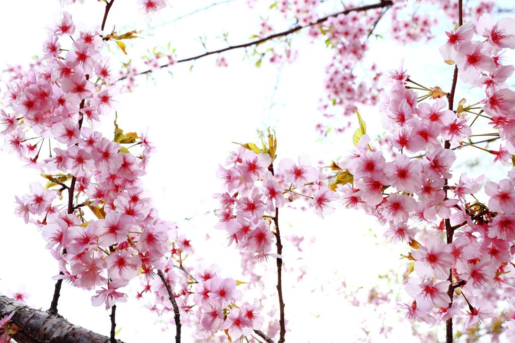 春景・・・。