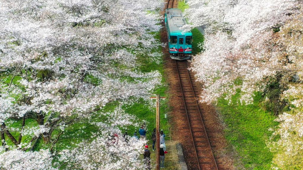 櫻 幻 列 車 . 7