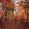 鯖江市西山公園 11月27日 06