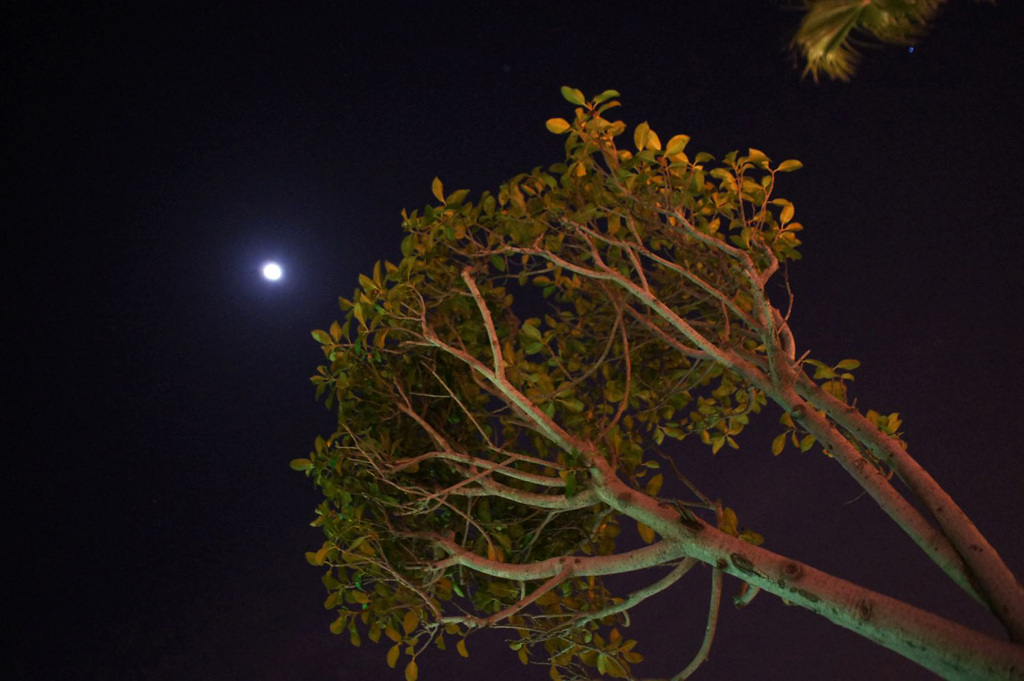 Night & Wood