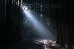 小道の射光