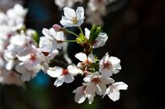 新芽と蕾と花弁