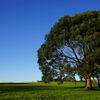 冬の木立 9