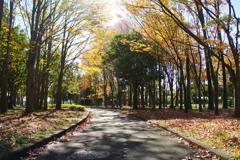 秋の水元公園 9