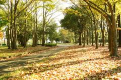 秋の水元公園 5