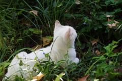 公園の猫 7(サブタイトル・・本当にいた猫 1)