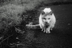 公園の猫 1