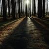 メタセコイアの森 9