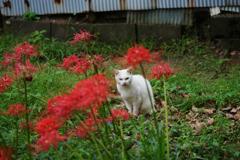 公園の猫 8(サブタイトル・・本当にいた猫 2)