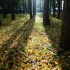 秋の水元公園 4