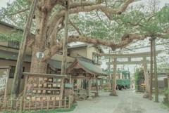 御霊神社と江ノ電