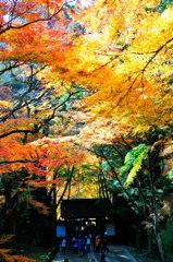 香積寺の紅葉