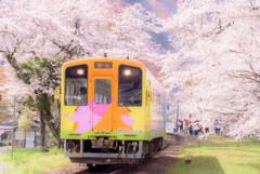 春爛漫のローカル線