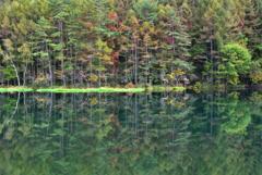御射鹿池の水鏡