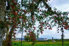 リンゴの実がたわわになる頃