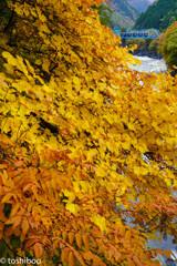 秋いろプライム