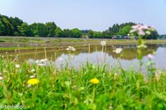 春の田んぼ道