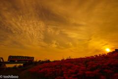 夕暮れ空に紅