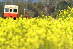 菜の花列車