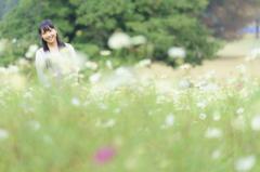 丘の上コスモスの花で
