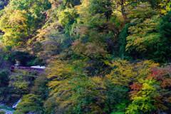 秋めく渓谷